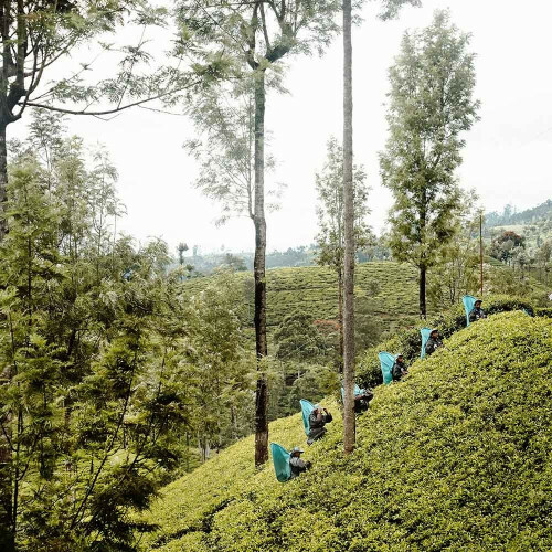 Communitea Colombo Enveloppe - Chai thee