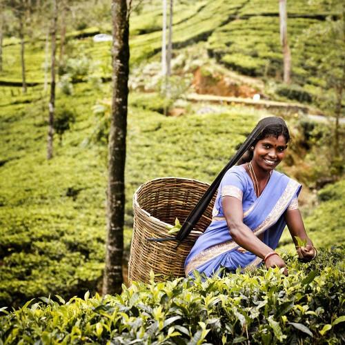 Communitea Colombo Enveloppe - Bosvruchten thee